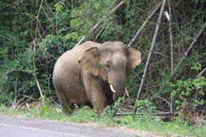 WILD ELEPHANT, APR 1, 11 058